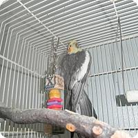Adopt A Pet :: Sammy - Neenah, WI