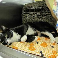 Adopt A Pet :: Olivia - Albany, NY