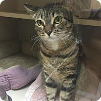 Adopt A Pet :: Bella-Xena - Laguna Woods, CA