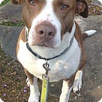 Adopt A Pet :: Kasey - Alpharetta, GA