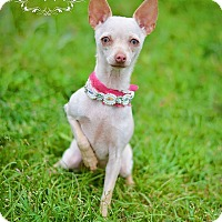 Adopt A Pet :: Kianna - Fort Valley, GA