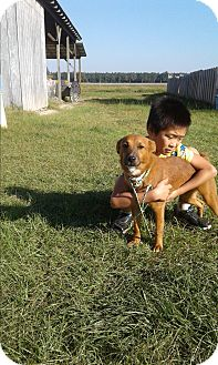 Collie Mix Dog for adoption in Mantua, New Jersey - Cheddar
