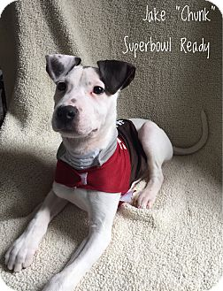 Hound (Unknown Type) Mix Puppy for adoption in Colonial Heights, Virginia - Jake aka Chunk