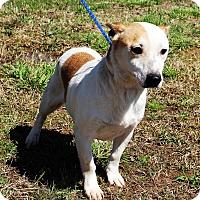 Adopt A Pet :: Jerry - Glastonbury, CT