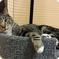 Adopt A Pet :: Luke - Whittier, CA