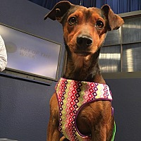 Adopt A Pet :: Slater - Rosamond, CA