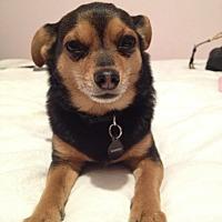 Adopt A Pet :: Joey - Courtesy Post - Encino, CA