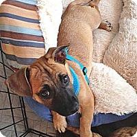 Adopt A Pet :: Fritz - Los Angeles, CA