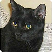 Adopt A Pet :: Spooky - Plainville, MA
