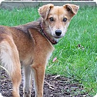 Adopt A Pet :: Maggie - Hastings, NY