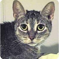 Adopt A Pet :: Freska - St. Clements, ON