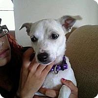 Adopt A Pet :: Kenna - South Amboy, NJ