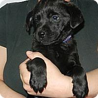 Adopt A Pet :: Cliff - South Jersey, NJ