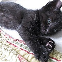 Adopt A Pet :: Newman - Vero Beach, FL