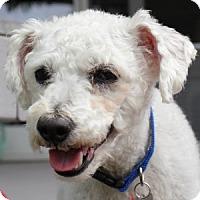 Adopt A Pet :: Charlie - La Costa, CA