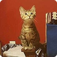 Adopt A Pet :: Chica - South Bend, IN