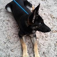 German Shepherd Dog Dog for adoption in SAN ANTONIO, Texas - MILES