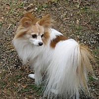 Adopt A Pet :: Bailey (age 14) in VA - Marietta, GA