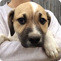 Adopt A Pet :: Kyle-pending adoption - Manchester, CT