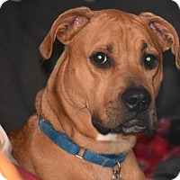 Adopt A Pet :: Duke - Fort Wayne, IN