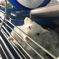 Adopt A Pet :: Vera - Greenfield, IN