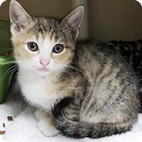 Adopt A Pet :: Bristol $20 - Lincolnton, NC