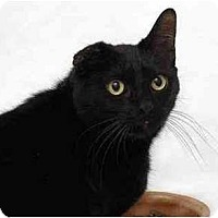 Adopt A Pet :: Scottie - Portland, OR