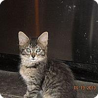 Adopt A Pet :: Nikki - Riverside, RI