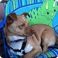 Adopt A Pet :: Lance - North Hollywood, CA