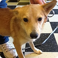 Adopt A Pet :: Abo - Phoenix, AZ
