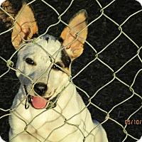 Adopt A Pet :: Addy - Tillamook, OR