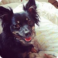 Adopt A Pet :: Kyla - Edmonton, AB