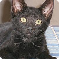 Adopt A Pet :: Renessa - North Highlands, CA