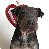 Adopt A Pet :: Pepe - Redding, CA
