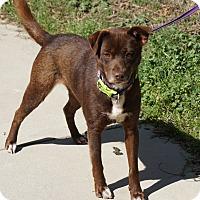 Adopt A Pet :: Willow - GREENLAWN, NY