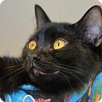 Adopt A Pet :: Mickey (bonded w Daisy) - Warren, MI