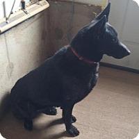 Adopt A Pet :: Dosia - Chinook, MT