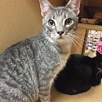 Adopt A Pet :: Howard - Morganton, NC