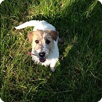 Adopt A Pet :: Janie - Cumberland, MD