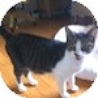 Adopt A Pet :: Chelsie - Vancouver, BC