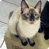 Adopt A Pet :: Liam - Long Beach, CA