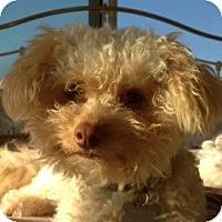 Adopt A Pet :: Grady - La Costa, CA