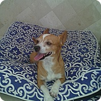 Adopt A Pet :: Sam - Scottsdale, AZ