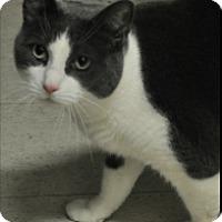 Adopt A Pet :: Tommy - Rockaway, NJ