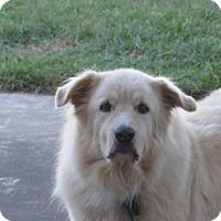 Adopt A Pet :: Outlaw - Hartford, VT