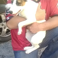 Adopt A Pet :: Caitlynn - Staunton, VA