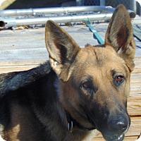 Adopt A Pet :: Farrah - Portland, ME