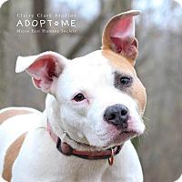 Adopt A Pet :: Sophie - Edwardsville, IL