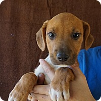 Adopt A Pet :: Dusty - Oviedo, FL