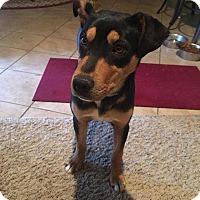 Adopt A Pet :: Brinkley - Billings, MT